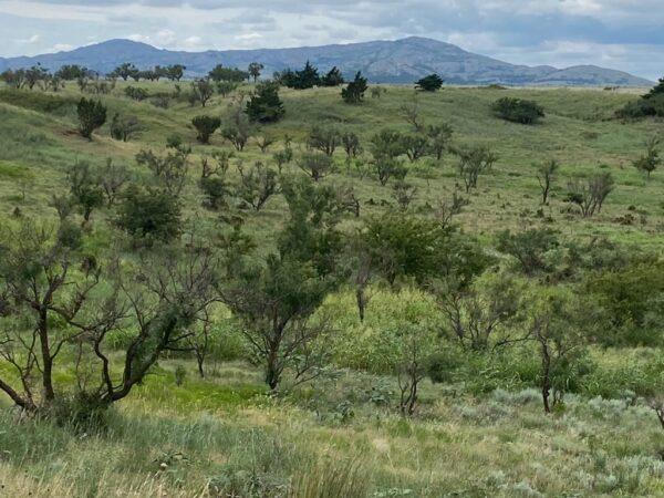 Kiowa County Oklahoma Hunting Lease